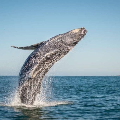 Een walvis kan zich van vreugde in één sprong omkeren. Dat kunnen organisaties ook.